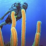 scuba-diver-300x450.jpg