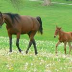 horses-4x3.25.jpg