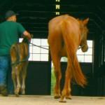 horsestable.jpg
